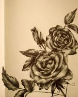 Rose Sketchbook Page by LucindaGuy
