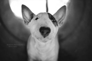 A Dog Wags Its Tail With Its Heart by HiawathaPhoto