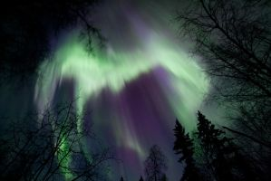 Enchanted Aurora January 21 2016 3033 by Line-of-Birds