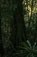 Stock 2989 - Rainforest Walk by LestatImage-Stock