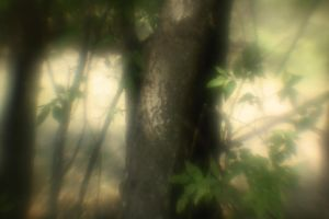 Tree, Baby by Phostructor