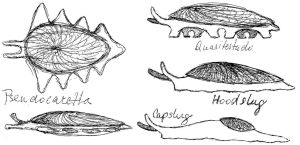 ''molluscoid'' ideas by palaeorigamipete