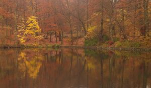 Autumn to the pond of Villebon by yuushi01