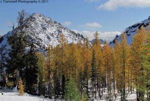 Unified Conifers by JLAT1990