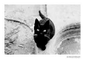 black cat by kursad