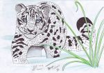 Sabrina's Name Leopard by FATRATKING