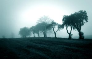 Misty Blue by Andenne