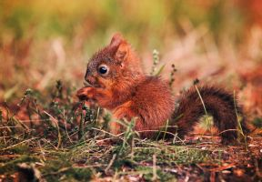 Baby squirrel by Thunderi