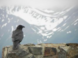 alaskan raven #2 by DemonDog47
