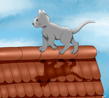 cat walking on the roof by torikaze