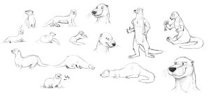 Otter Sketch Dump by Temiree