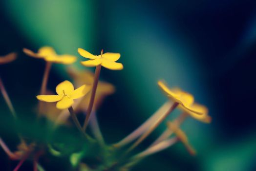 YELLOW MOMENTS by Hussain-Studio