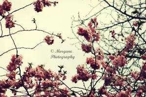 Springtime lovers. by MorganePhotography