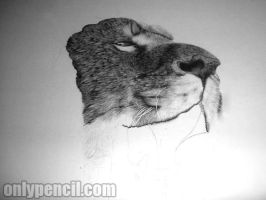 "30""x40"" Lion Drawing - WIP 1 by chandito"