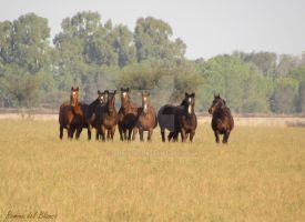 Group of Mares by Romydb
