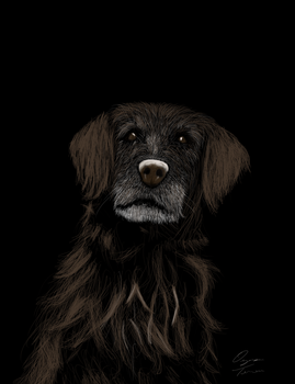 Old Dogs Can be Cute, Too by She-Does-Evil-Dances