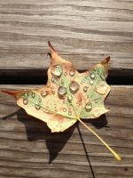 Leaf With Raindrops by wolfhunte