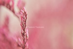 Pink Dream 2 by teresastreasures72
