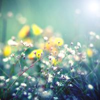 summer touch by BlueFish24