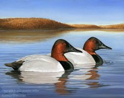 Cayuga Canvasbacks by Nambroth