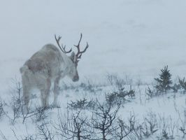 Struggling in the snow by LucieG-Stock