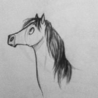 Horse by ambienti