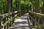 Natchez Trace (stock) 23 by OrielRain