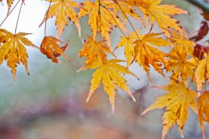autumn colours 9 by AngiWallace