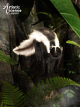 Little Skunk by Gwasanee