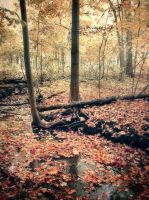 Autumn Decay by photorip
