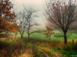 misty autumn IV by Weissglut