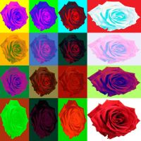 Rainbow roses by NomNom2010