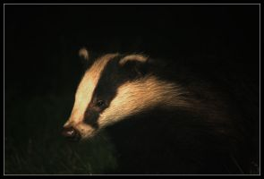 badger by Batteryhq