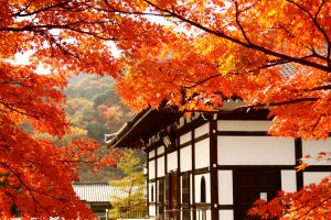 Kyoto Autumn by MussBot