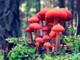 Red mushrooms by Banjis