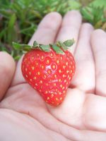 Stawberry I by KW-stock