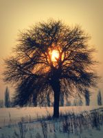 Tree by Veronica626