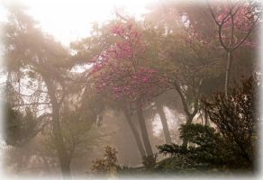 Trees in haze by ShlomitMessica