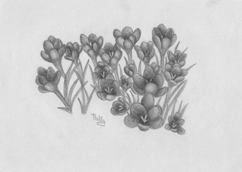 Crocus by polly-pantoflickova