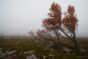 Dolly Sods Autumn by LAlight