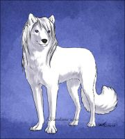 Wolf by ashkey