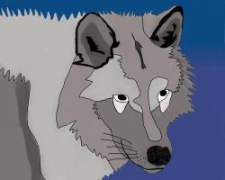 wolf agin by daylover1313