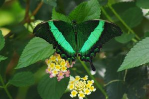 green butterfly by a-beautiful-soul