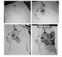 Cat_WIP by Maarel