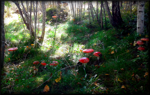 Toadstool Stock 3 by swandog