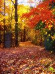 .:20 Autumn Drive:. by Token-One