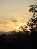 Sunset through the trees by Sariebear20