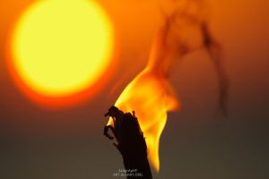 Flamboyant Sun by alahay
