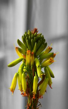 Waxy Green by BugScoop12