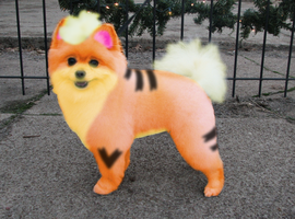 Real-life growlithe by Dogtorwho
